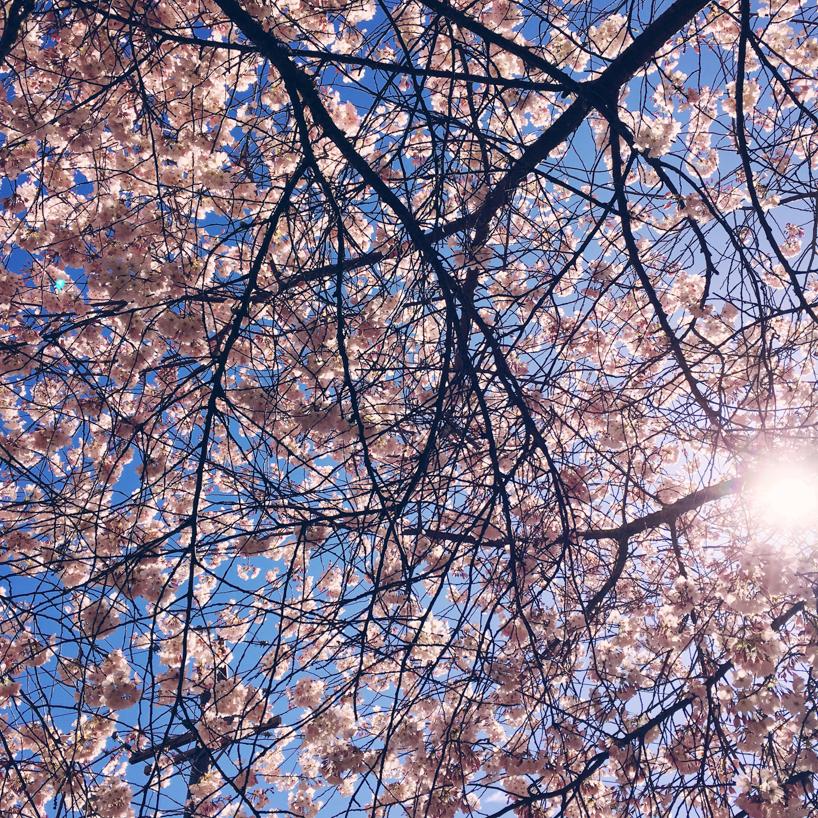 Spring-in-Ashland-OR.jpg