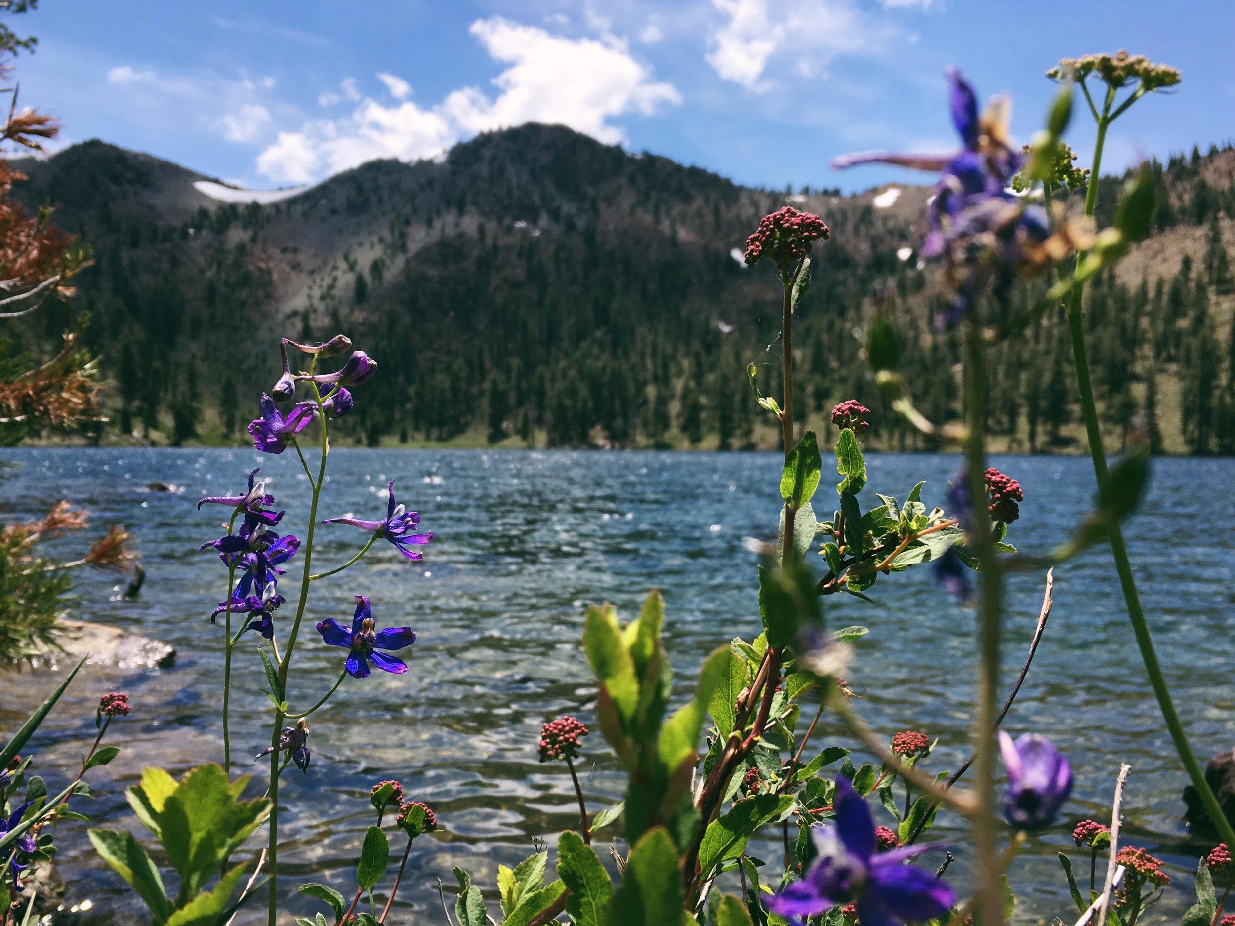 Deadfall lakes.jpg