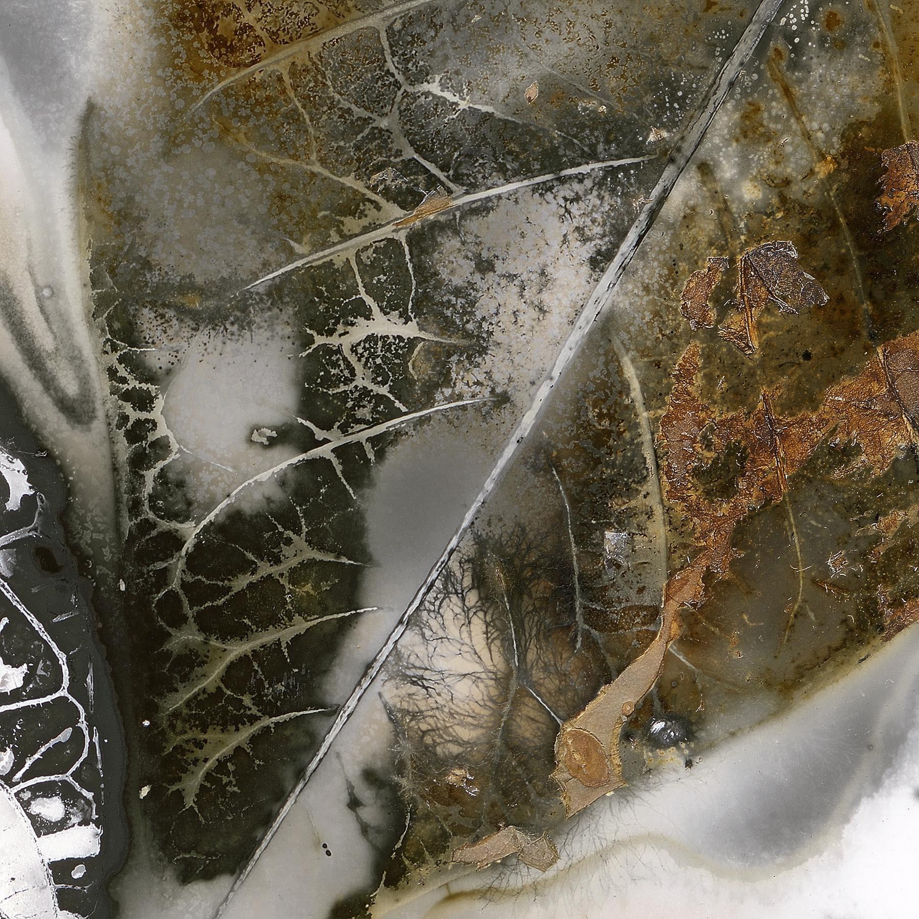 Edward Bateman, Leaf No 30 - Salt Lake City, Utah USA