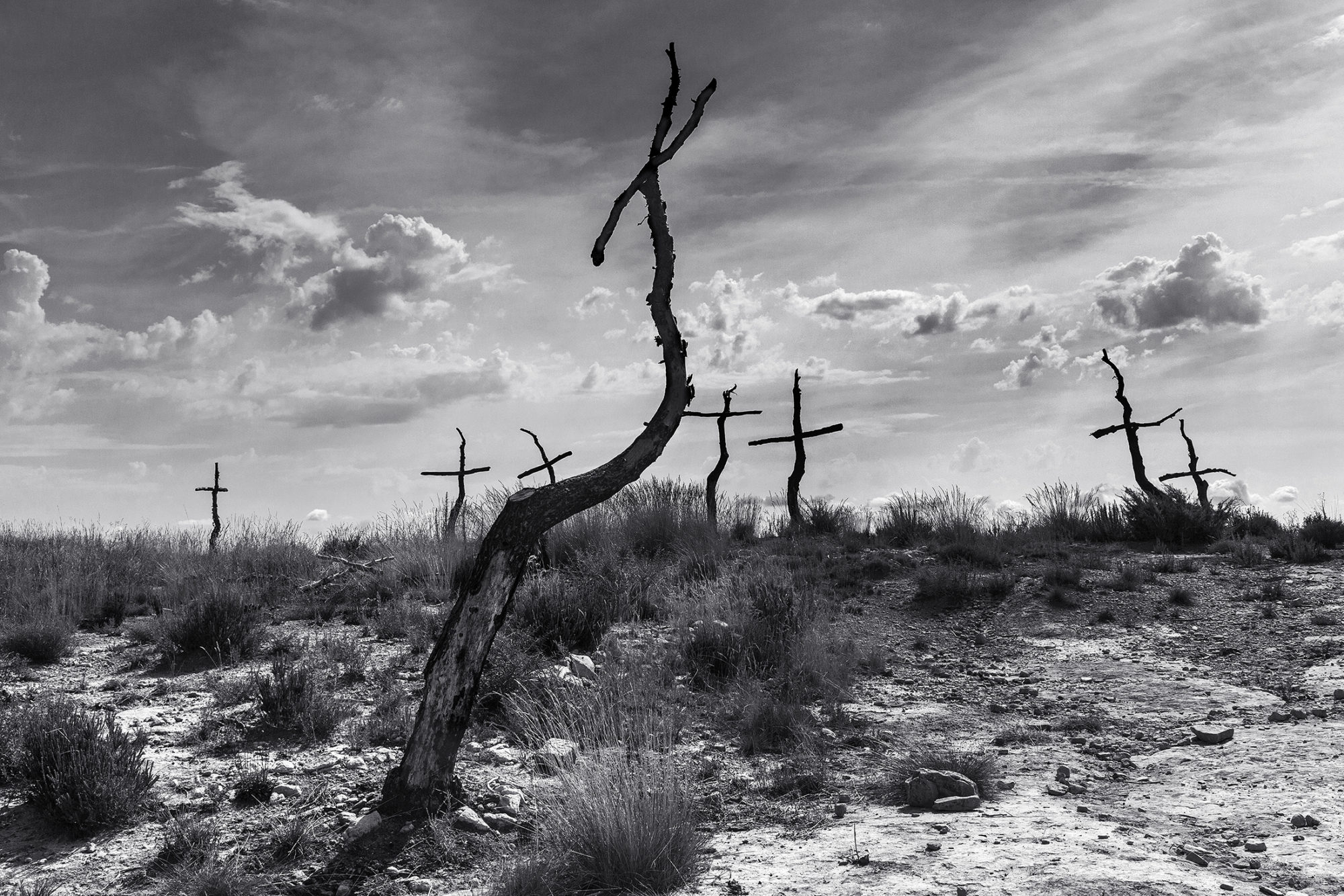 Mark Benham, 'Forest of the Crosses #4' (2018)