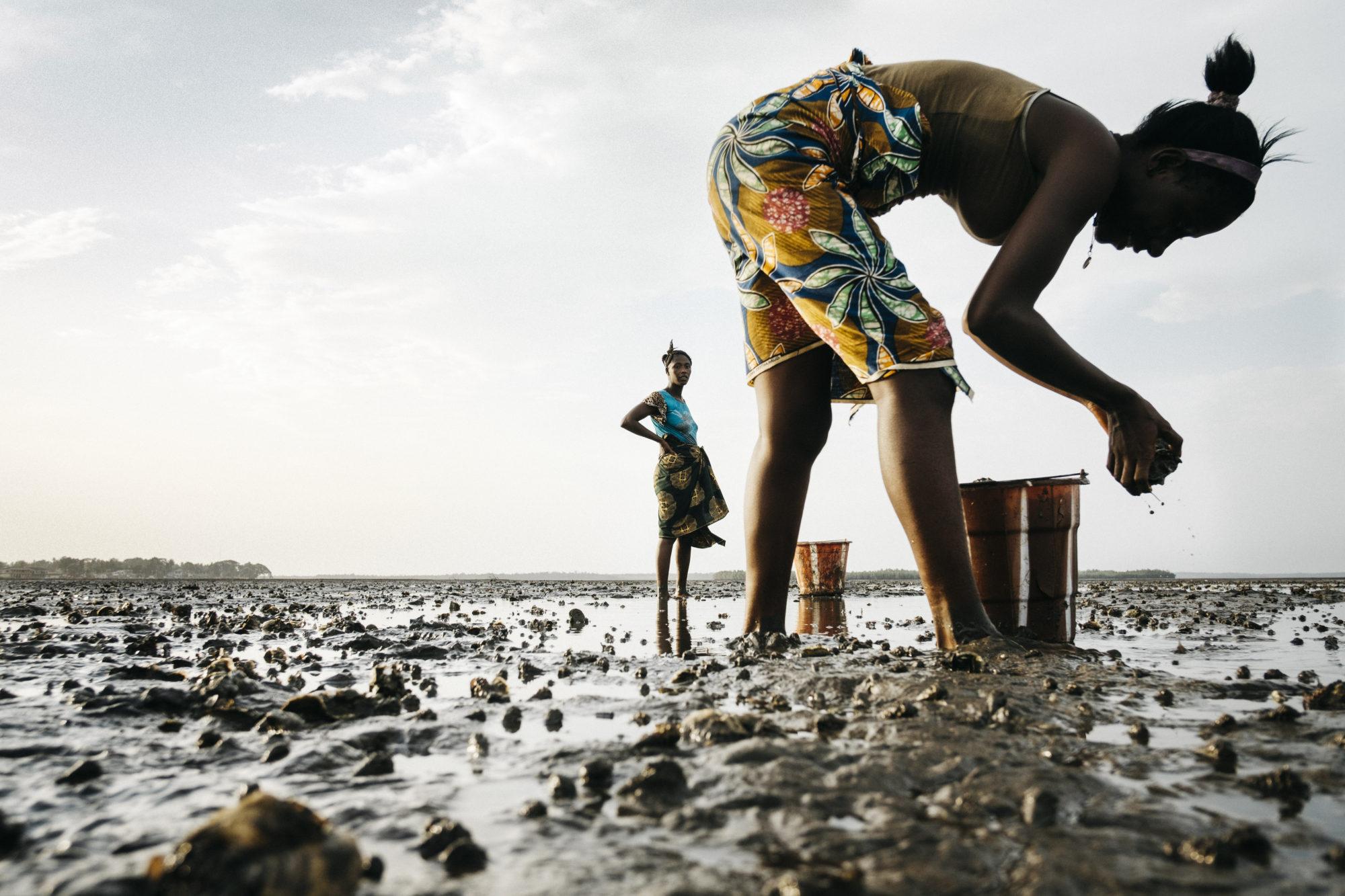Greg Funnell , 'Oyster Harvesting, Sherbro River Delta' (2018).