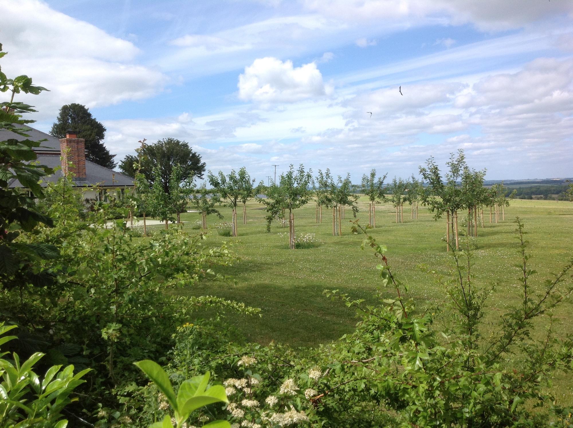 WIndmill Farm landscape architecture 03.jpg