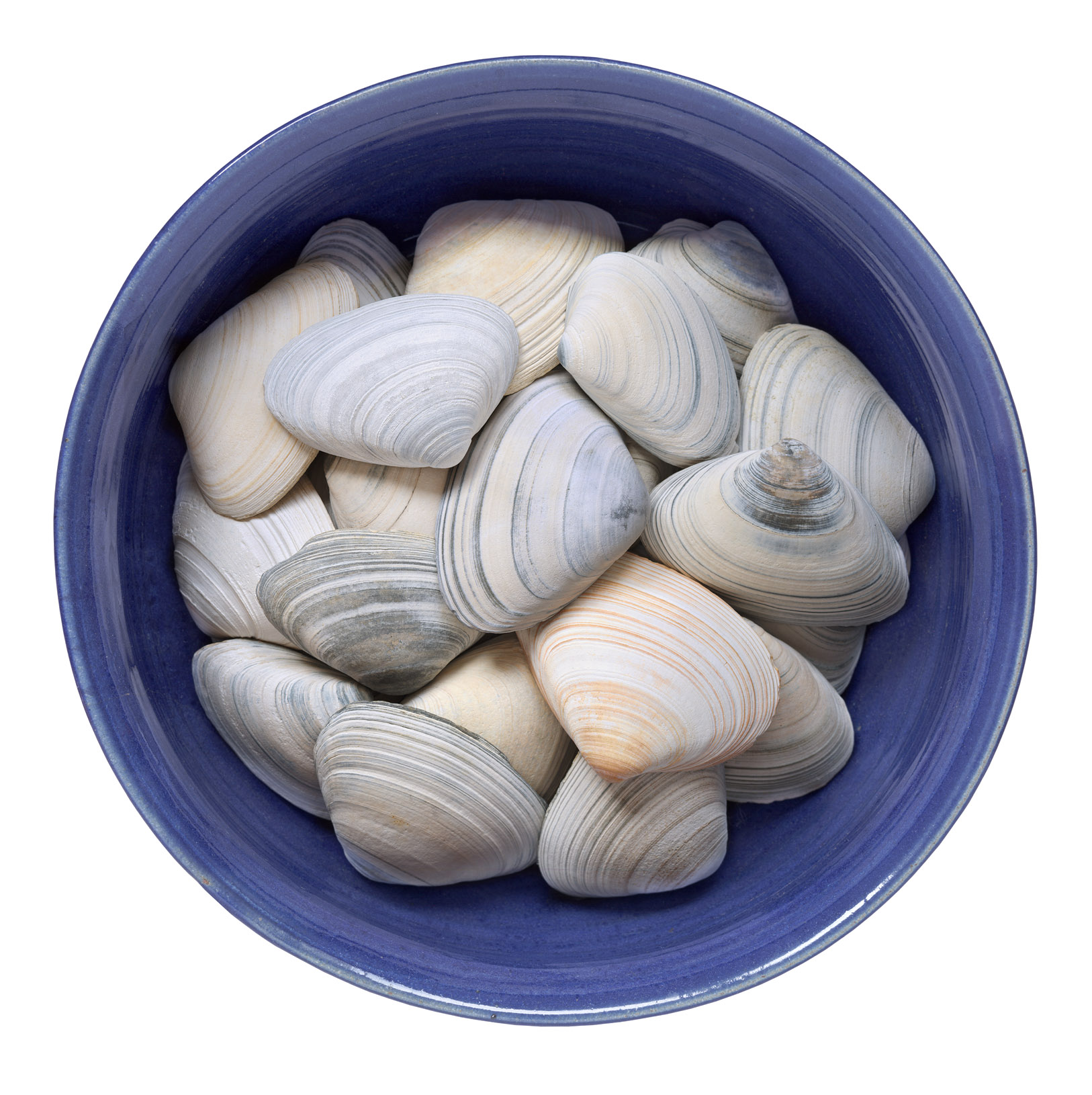 Shells In Blue