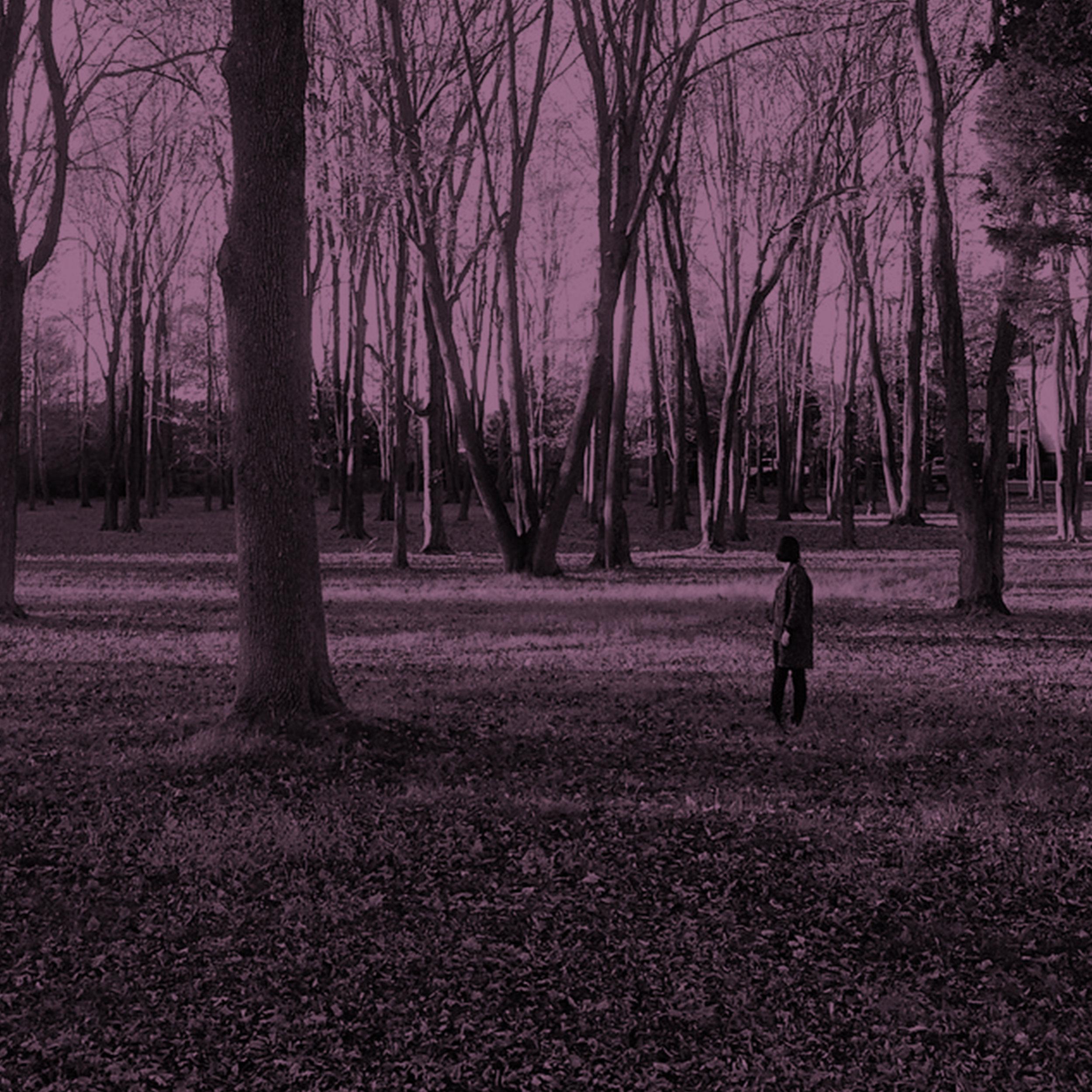 iphone_trees_w.jpg