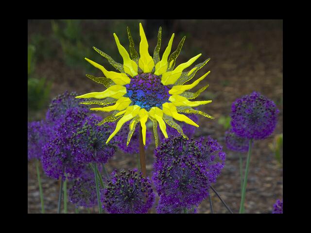 - Glass Sunflower $275