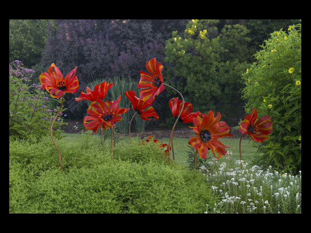 - Outdoor Poppies $500 (each)