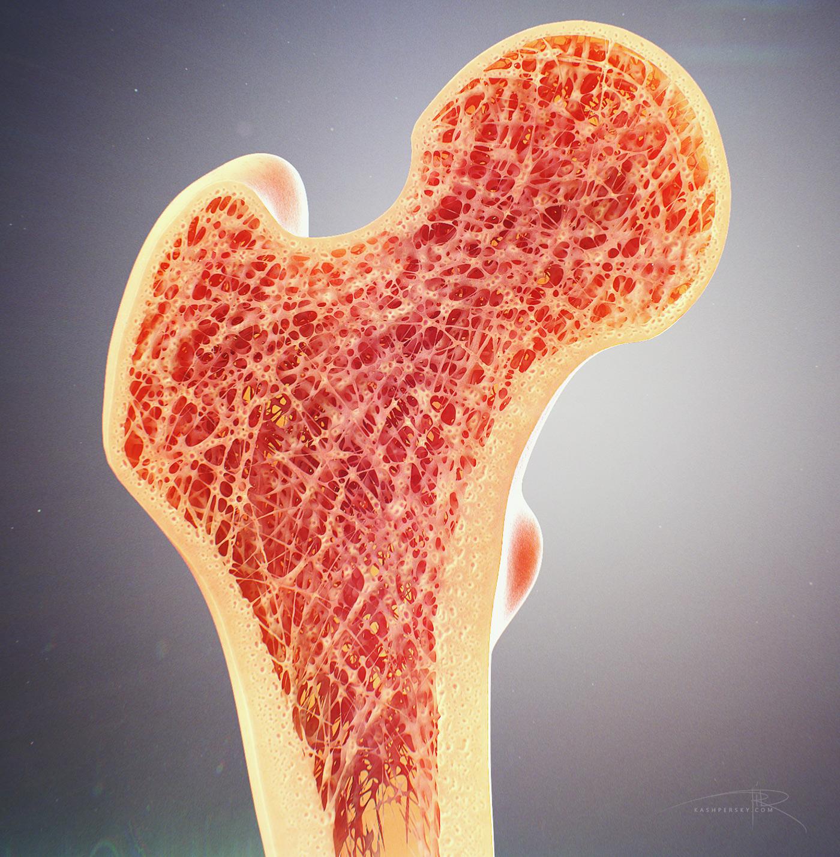 bone cross section.jpg