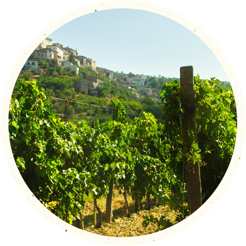 drinks-magrez-region-rhone.jpg