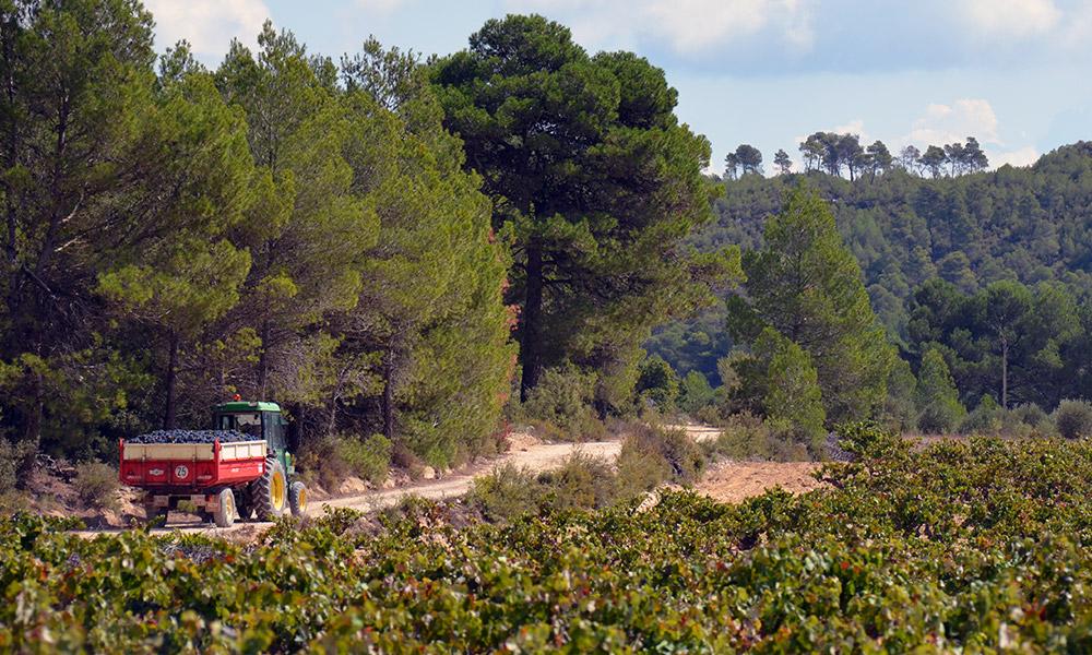 drinks-benoit-valerie-calvet-spain-vineyard-harvest.jpg