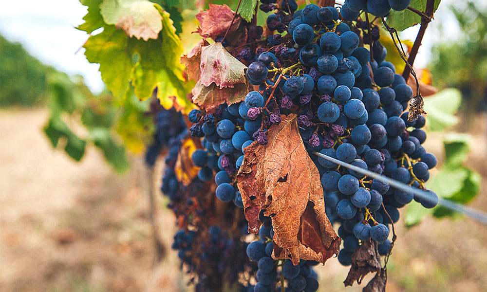 drinks-producta-vignobles-stats-winegrowers.jpg