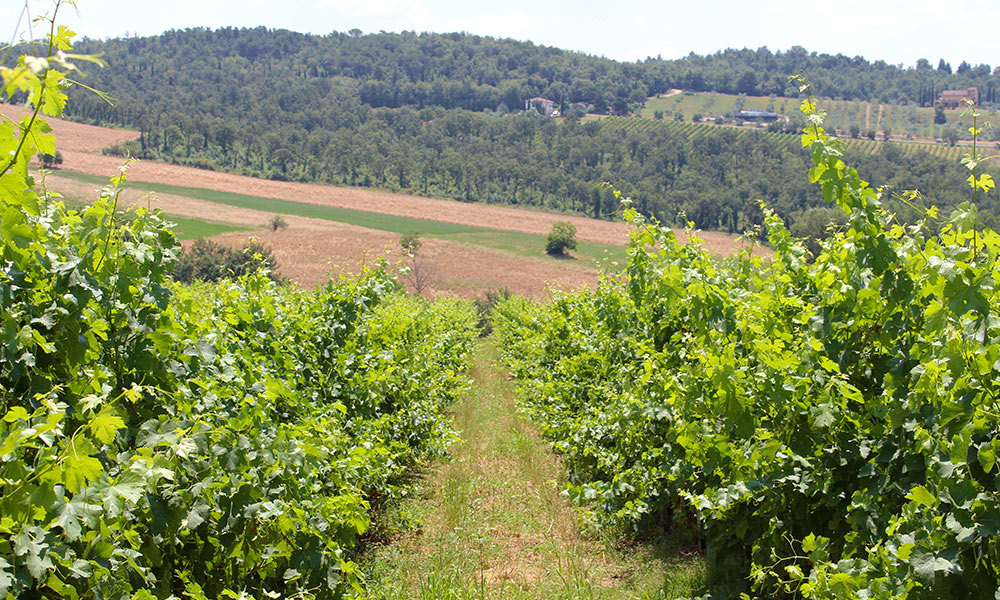 drinks-coli-stats-vineyards.jpg