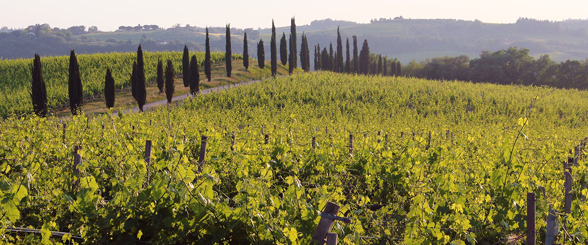 The rolling hillsides of Tuscany