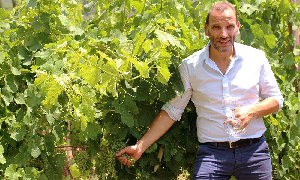 drinks-coli-vineyard-harvest.jpg