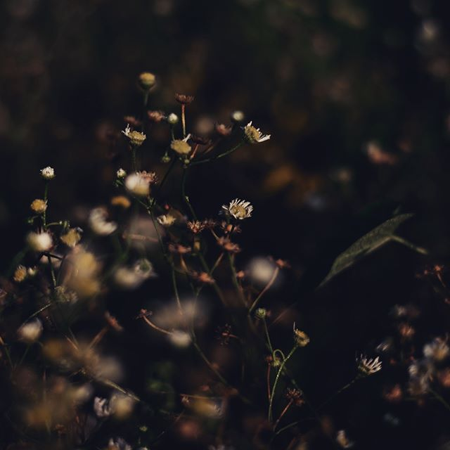 You weren't just a phase. You are still my every day. #moodygrams #flowers #poetry #mood