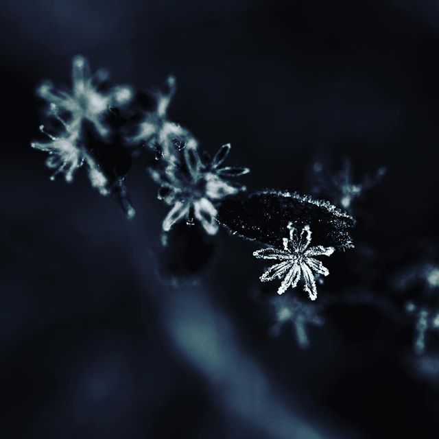 Little star. . . . . . #justgoshoot #vsco #frost #macromood #rsa_macro #december #artofvisuals #exploreeverything #macro #liveauthentic #createexplore #visualsoflife #nature #photooftheday #peoplescreatives #agameoftones  #exploretocreate #lifeofadventure #nikon #fall #vscogood #macro_mextures #moodygrams #communityovercompetition #washmo #mextures #stlouisphotographer