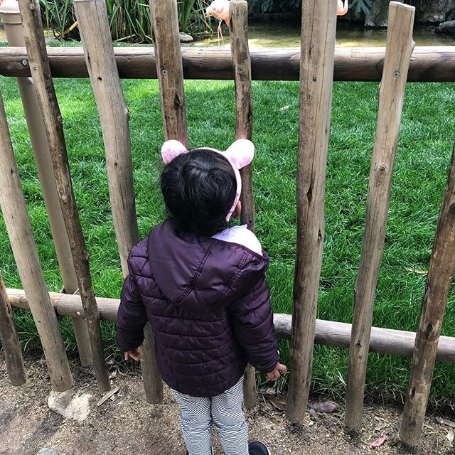 """May you never lose your wonder""... Let's learn from our children how to be curious again, surprised again, excited by the mundane again. We can still claim what was lost and find joy amidst responsibilities!  #momlife #thenewmomshow #childhood #toddler #toddleractivities #toddlerlife #wildandfree #peppapig #mompodcast #momblogger"