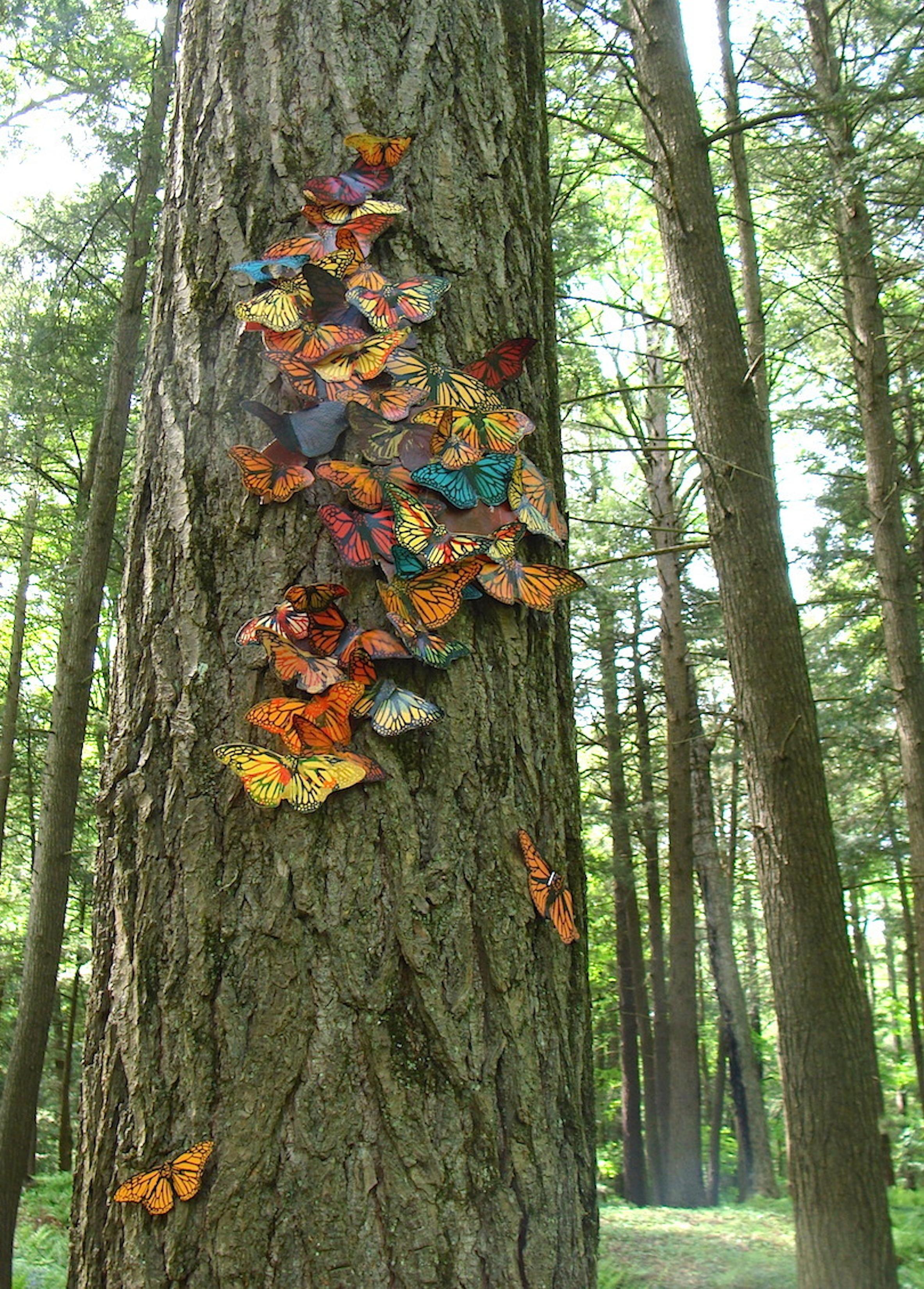 tree +1 2525 copy.jpg