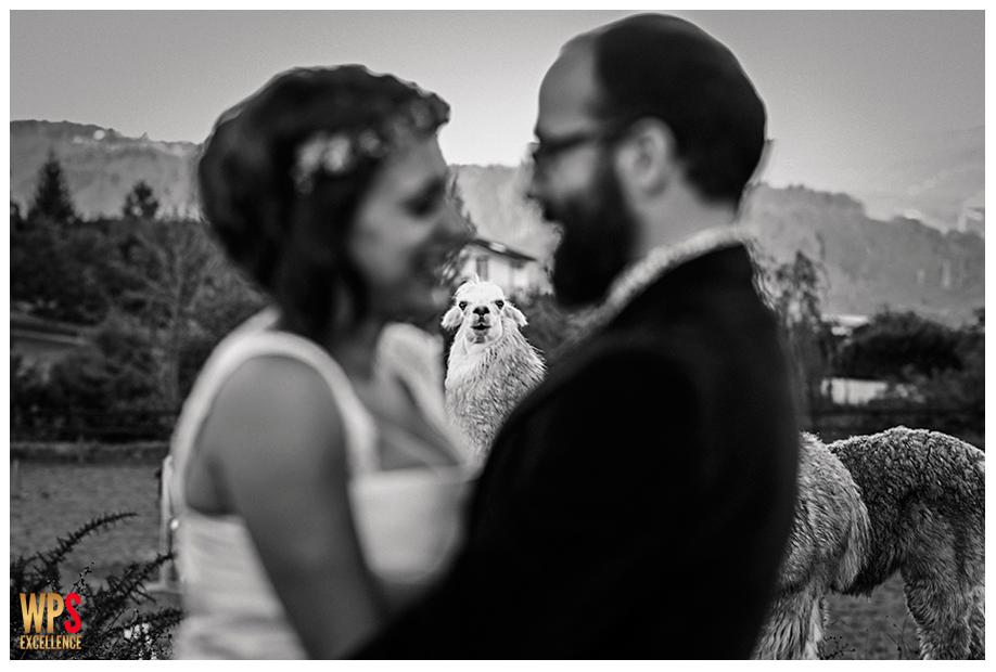 Premio mejor fotografo foto graciosa best wedding photo