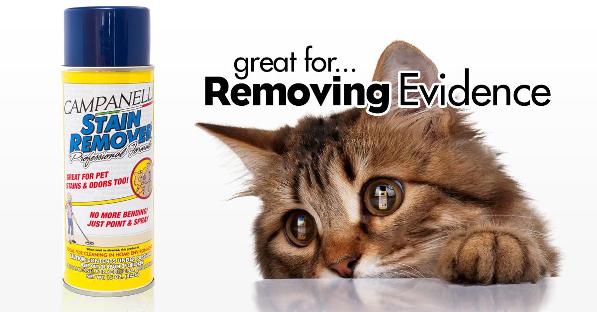 CatRemovingEvidence.jpg