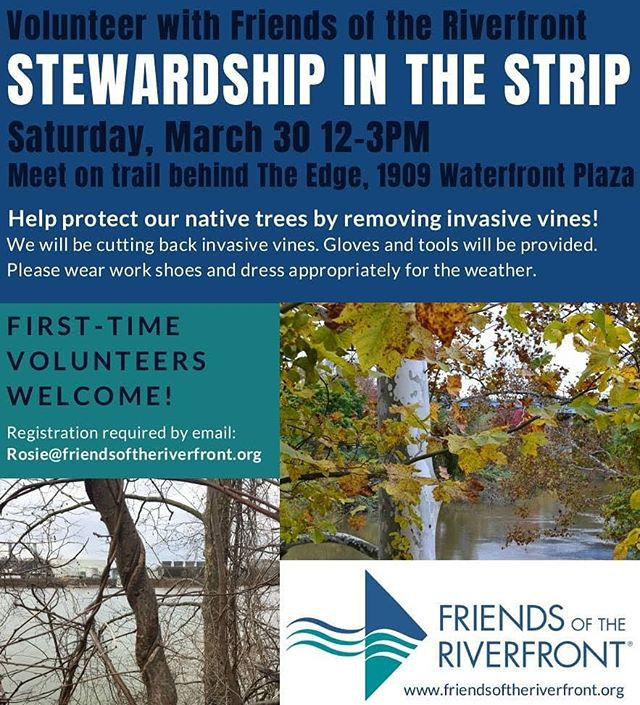 Kill vines. Save trees. That's the mission in the #StripDistrict this Saturday! Email Rosie@friendsoftheriverfront.org to volunteer.