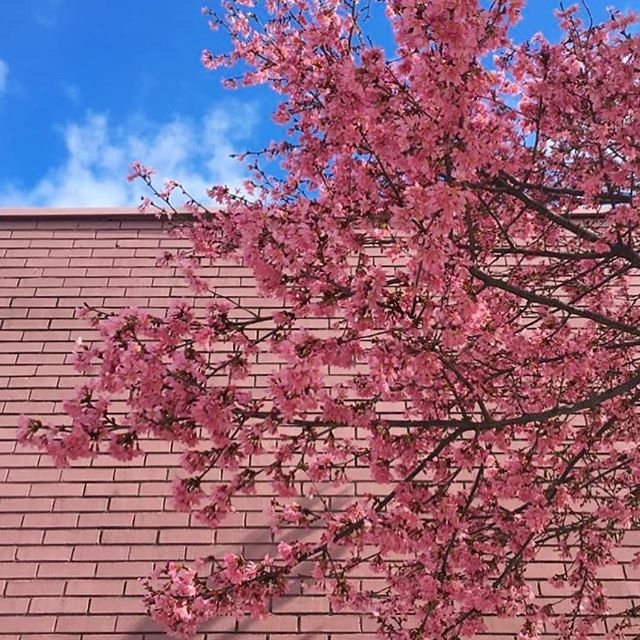 Spring has sprung in the #StripDistrict 🌸 . 📸 by @sarahjugs
