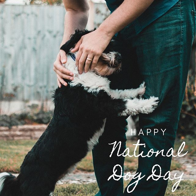 At #PetsforPatients, we know firsthand the comfort and love dogs bring to our lives. Are you doing something extra special to celebrate them today? ❤️ • • • #nationaldogday #nationaldogday2019 #companiondog #mydogismytherapy #comfortdog #lovemelovemydog #dogstagram #dogsofcincy #dogmomsofcincy #cincinnatiohio #dogsofohio