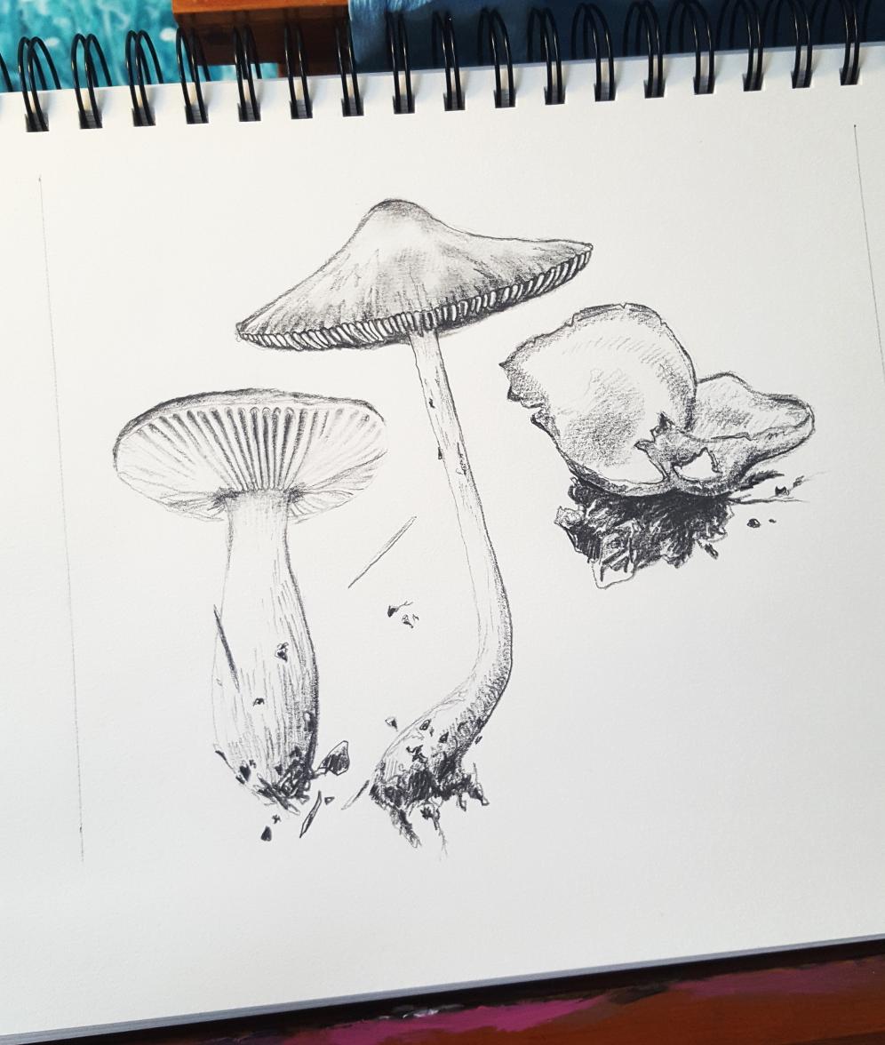 mushroom_sketch_nigel_sutcliffe.jpg