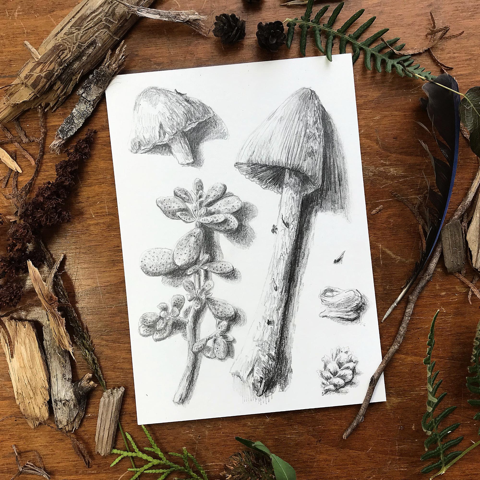 Kamloops_Forest_Finds_sketch_Nigel_Sutcliffe_web.JPG