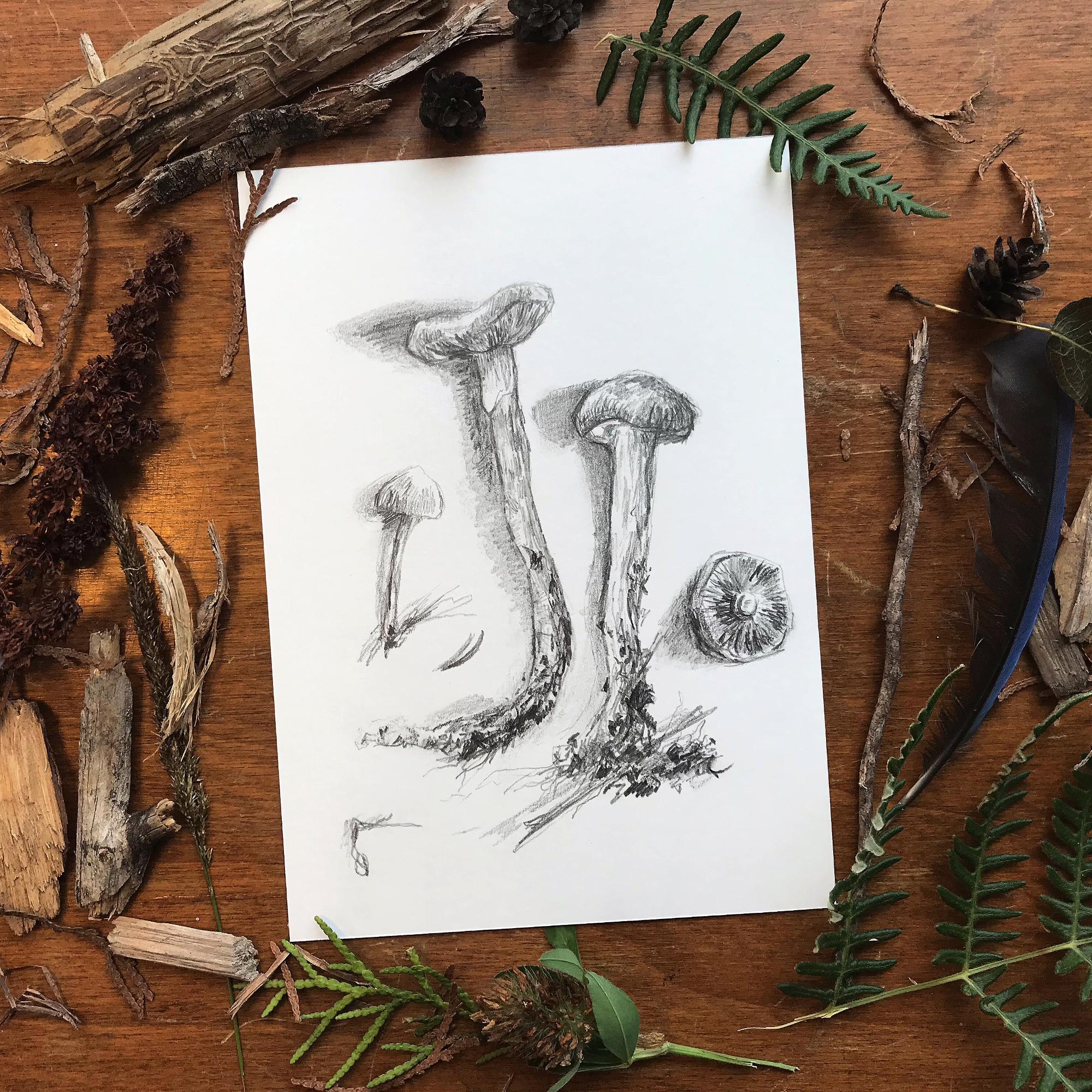Forest_Finds_3_Nigel_Sutcliffe_web.JPG