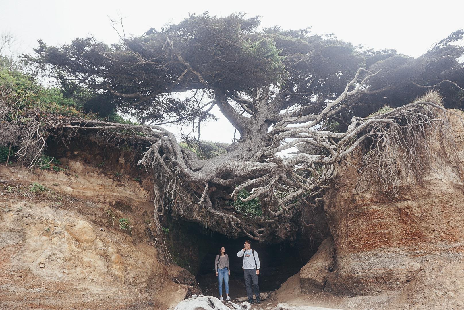 Tree of Life - May 2018