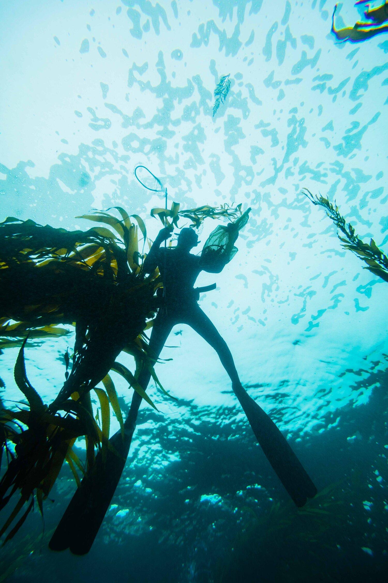 kelp soul sand elevator