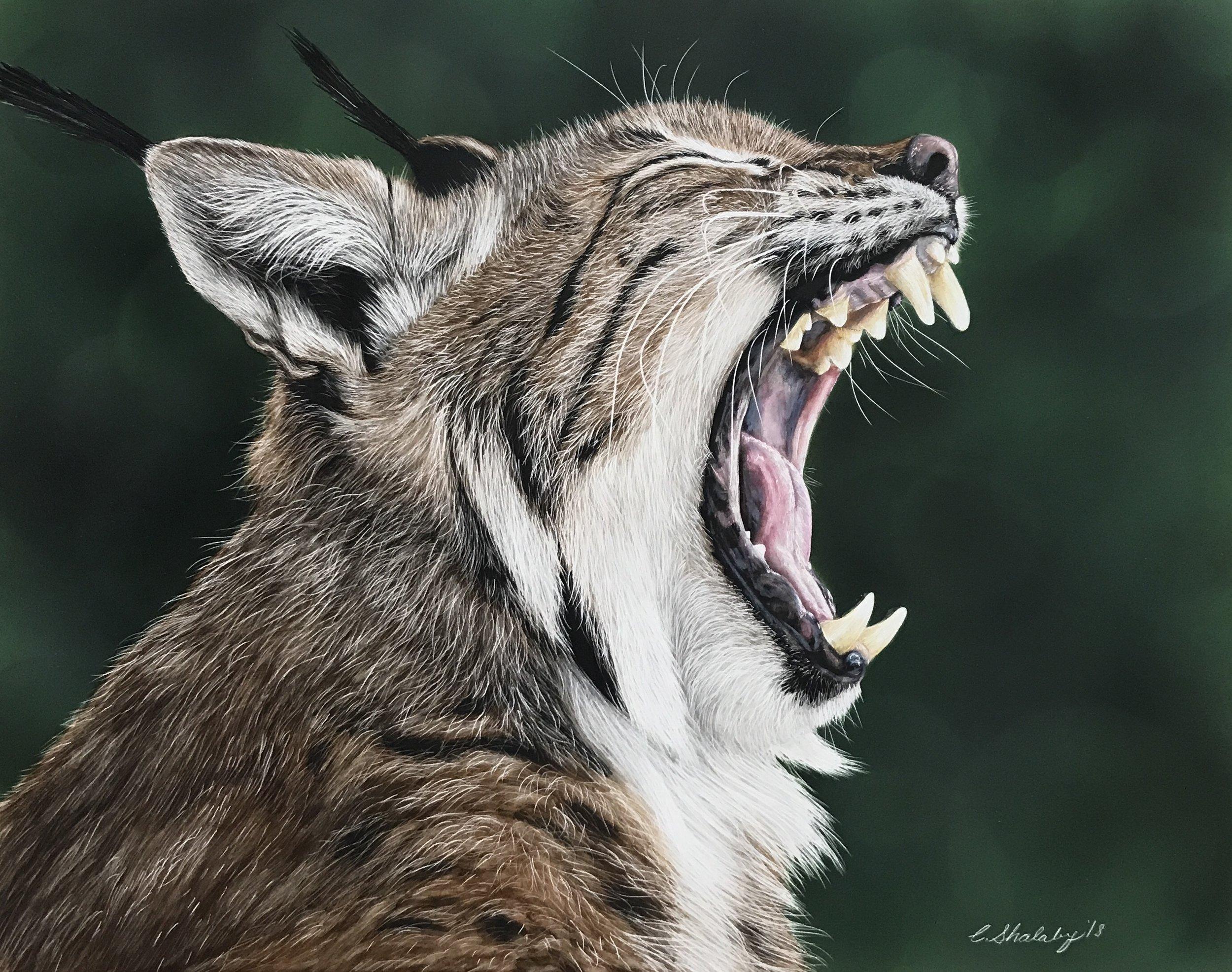 """""""Yawn"""""""