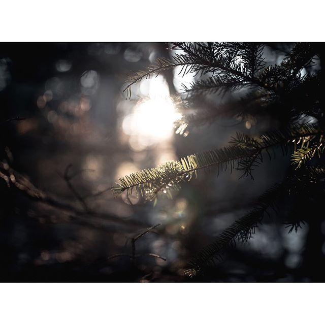 Sunset... . . . . #exklusive_shot #shotaward #pinetree #nikonphoto_ #rsa_rural_ #bokehlicious #bokehphotography #bokeh_kings #artofvisuals #gameoftones #nikonphotography #gramslayers #artofvisuals #sunflare #sunset #ourmoodydays #visualsoflife #leagueoflenses ourplanetdaily #depthobsessed #aov #artistfound  #adoberisingstars #cinebible #cinematiclook