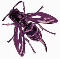 killer T wasp5.png