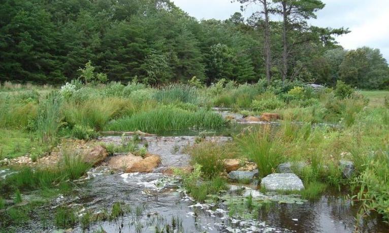 North Grays Bog Wetland Restoration