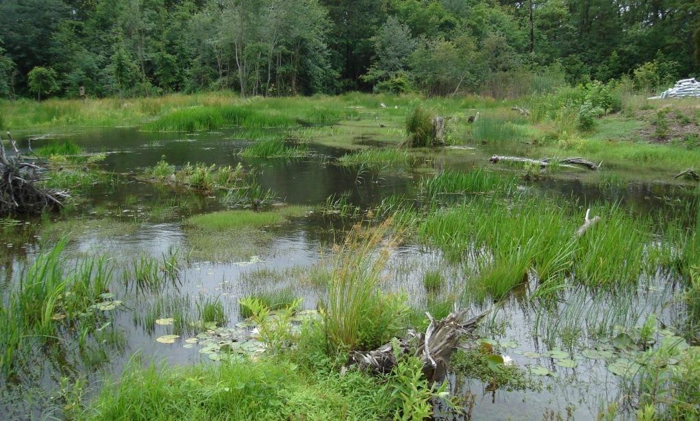 North Grays Bog (3).JPG