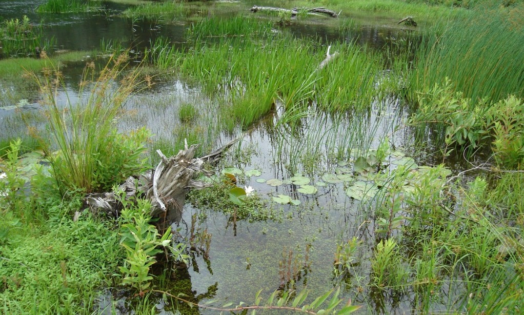 North Grays Bog (4).JPG