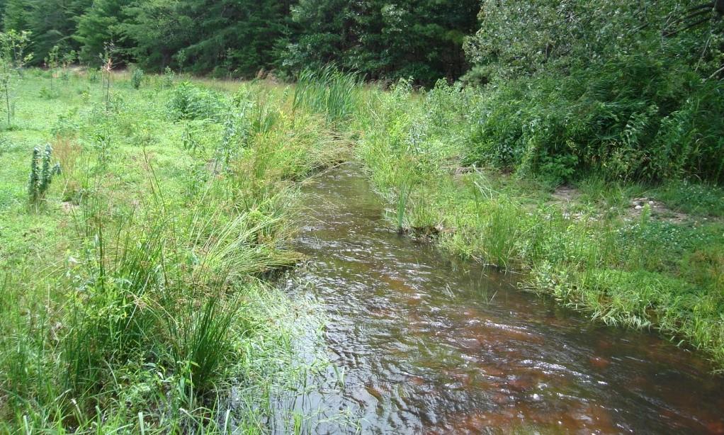 North Grays Bog (5).JPG