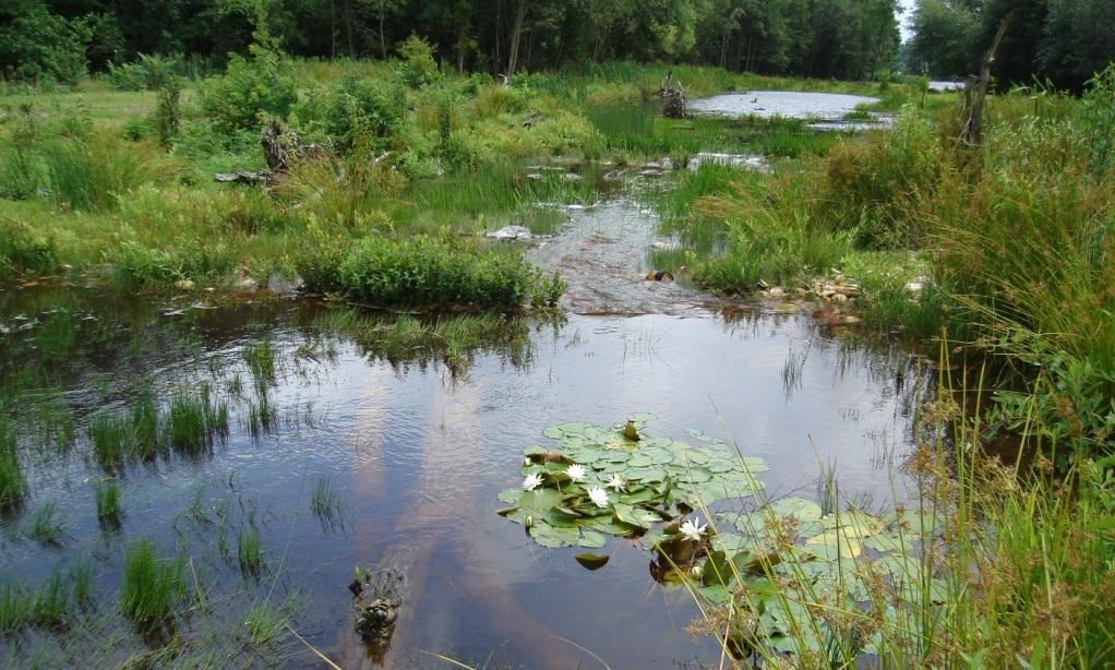 North Grays Bog (6).JPG
