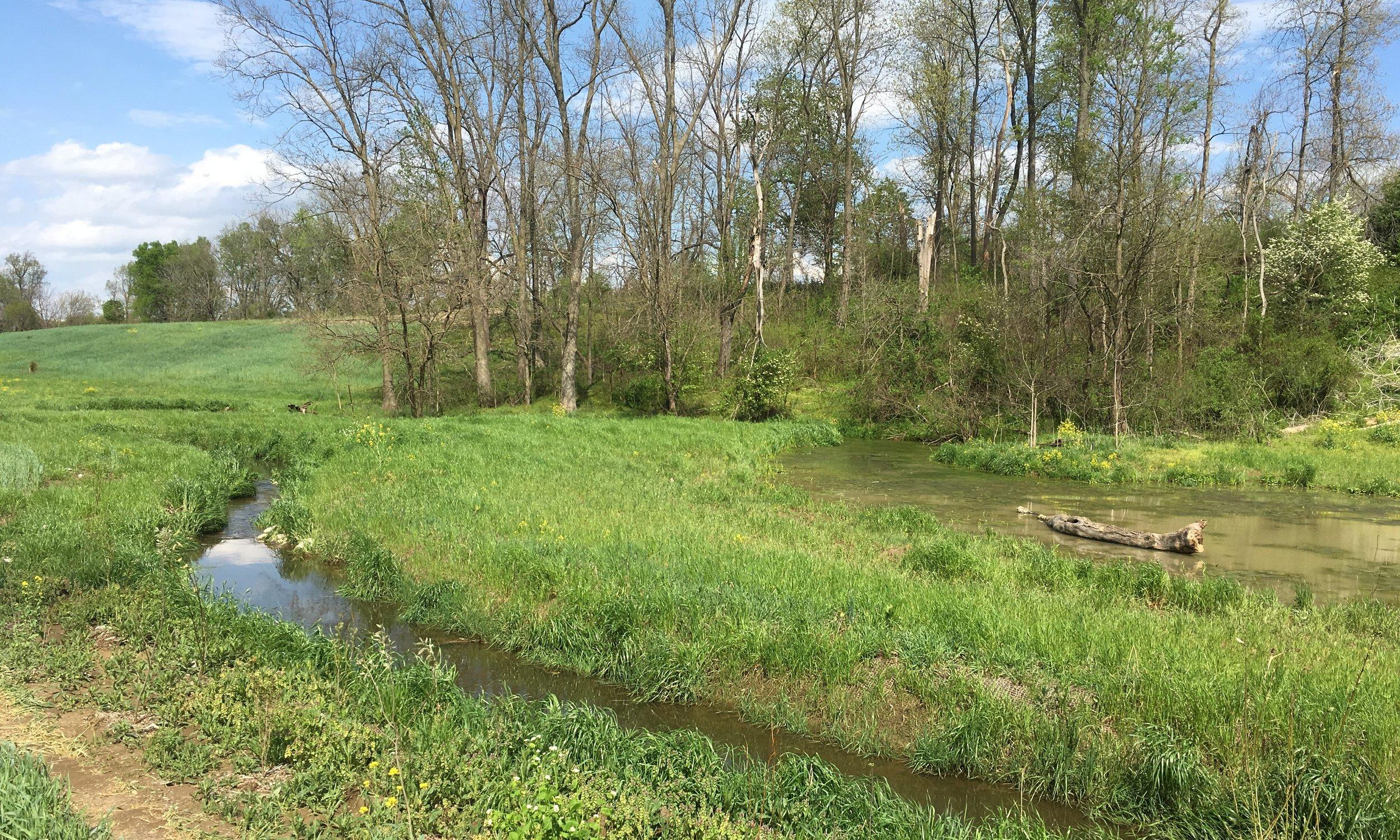 Haines Branch Mitigation, Stream & Ecological Restoration