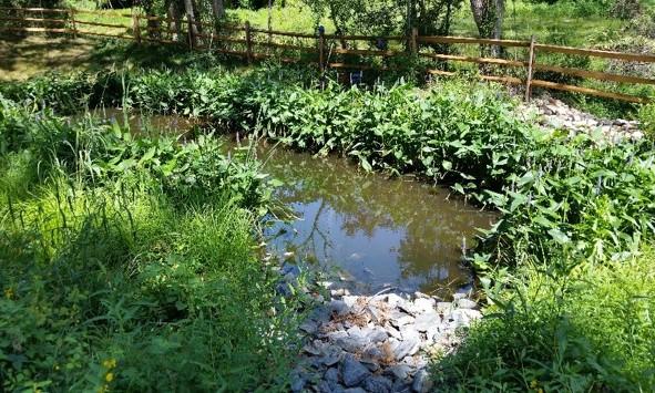 Wheel Creek (7).jpg