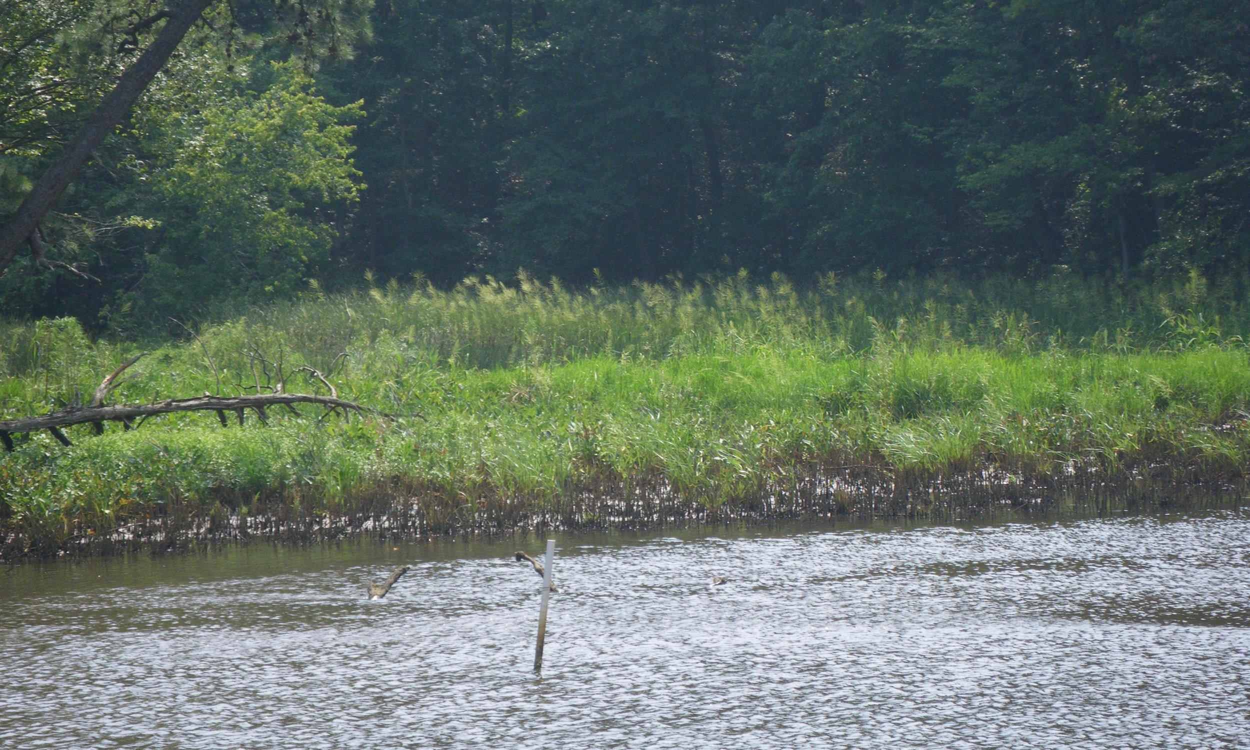 Mill Creek HW (2).jpg