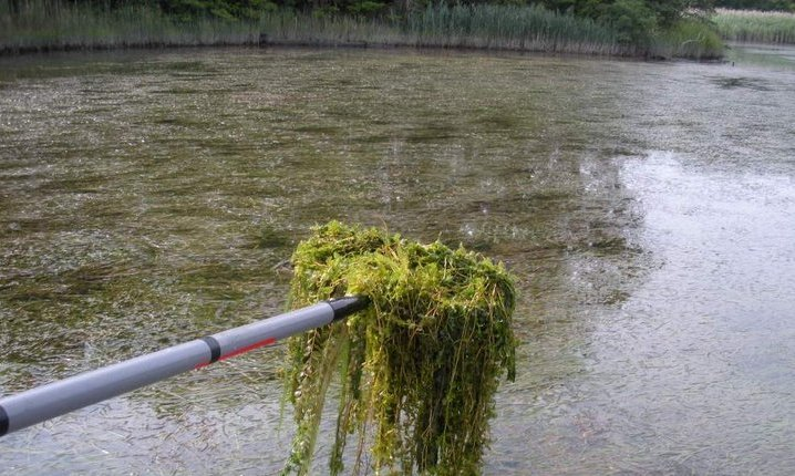 Chesapeake Bay Submerged Aquatic Vegetation Monitoring Program