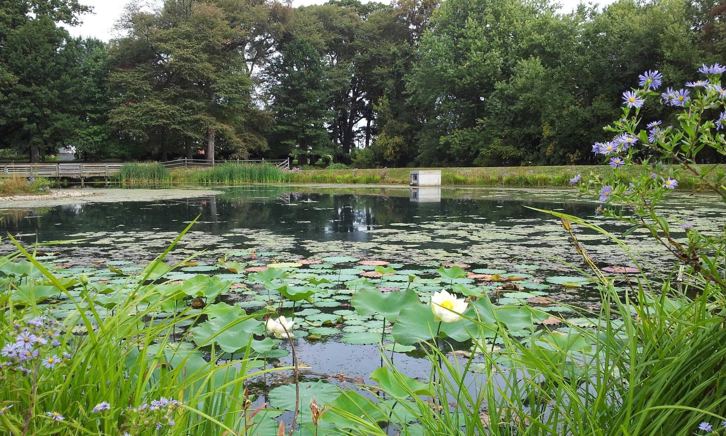 Friends Park Pond (1).jpg