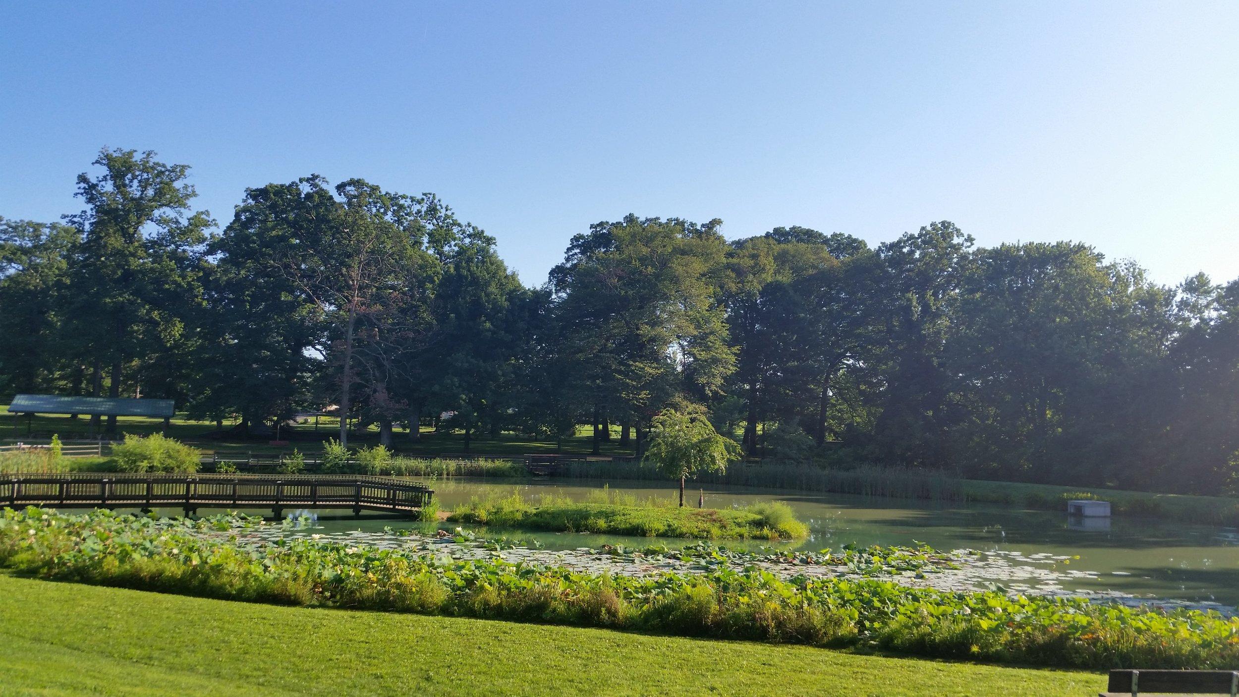 Friends Park Pond (2).jpg