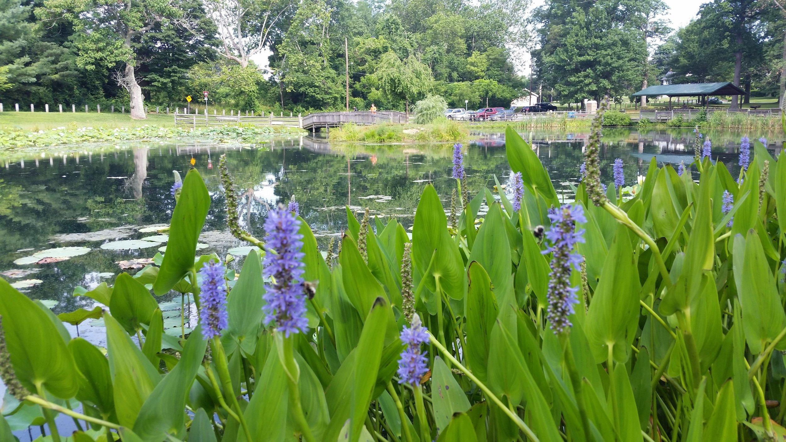 Friends Park Pond (3).jpg