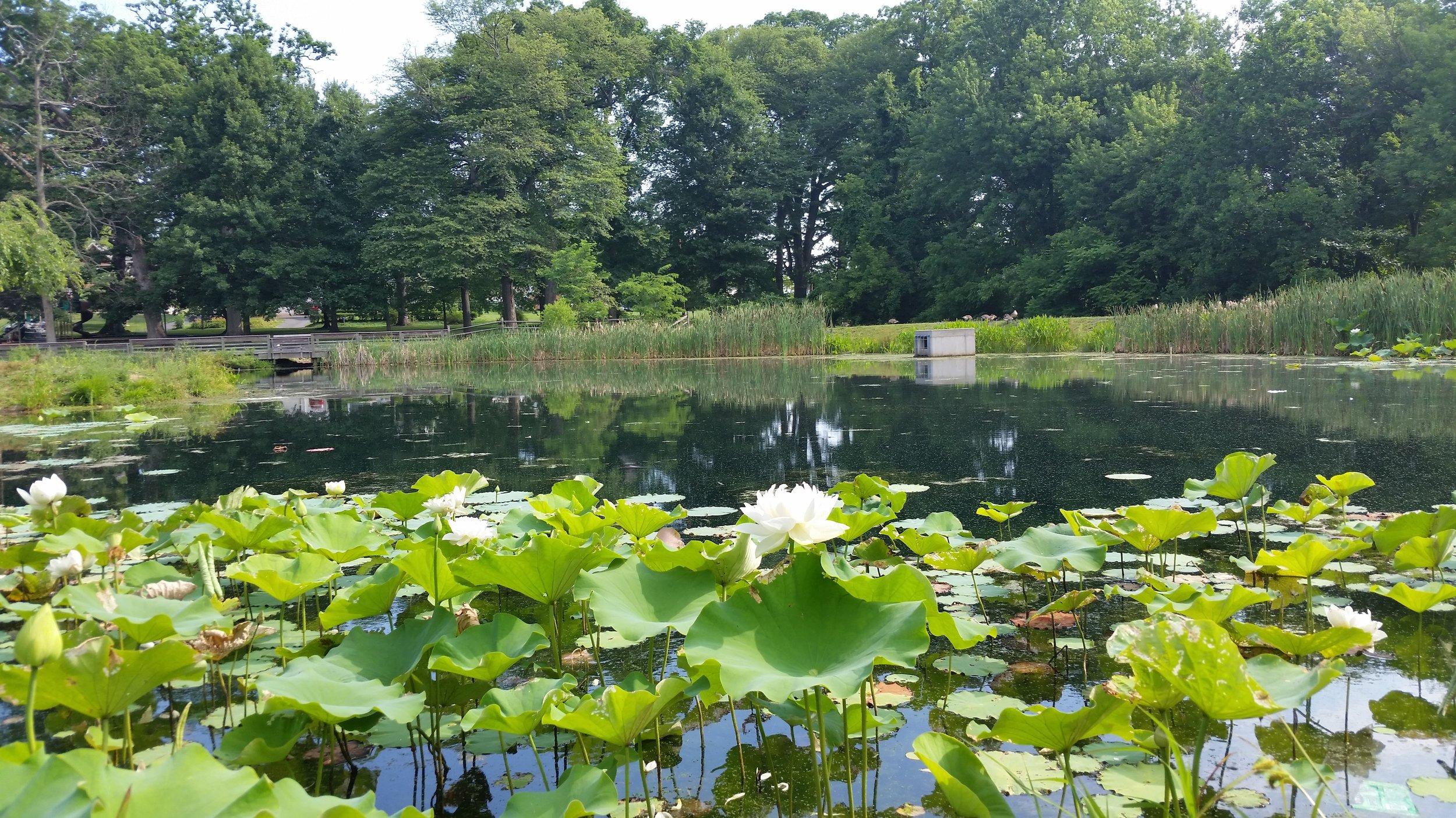 Friends Park Pond (4).jpg