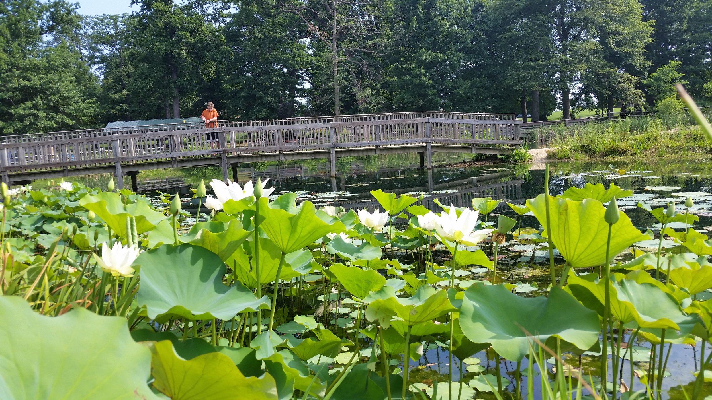 Friends Park Pond (5).jpg