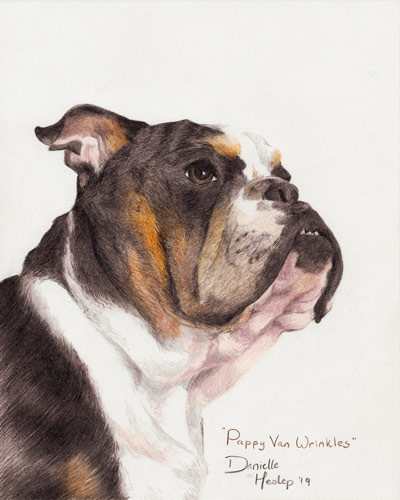 Pappy Van Wrinkles - Pet Portrait