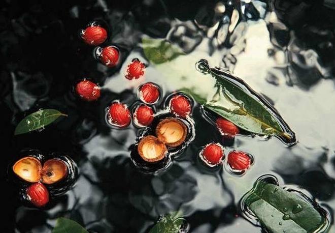 Natura_1.jpg